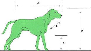 Cats and dogs measurements
